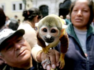 monkey_blessingoftheanimals_lima