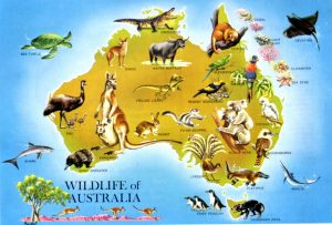 large_detailed_wildlife_map_of_australia