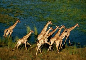 kinopoisk.ru-African-Adventure_3A-Safari-in-the-Okavango-1574585